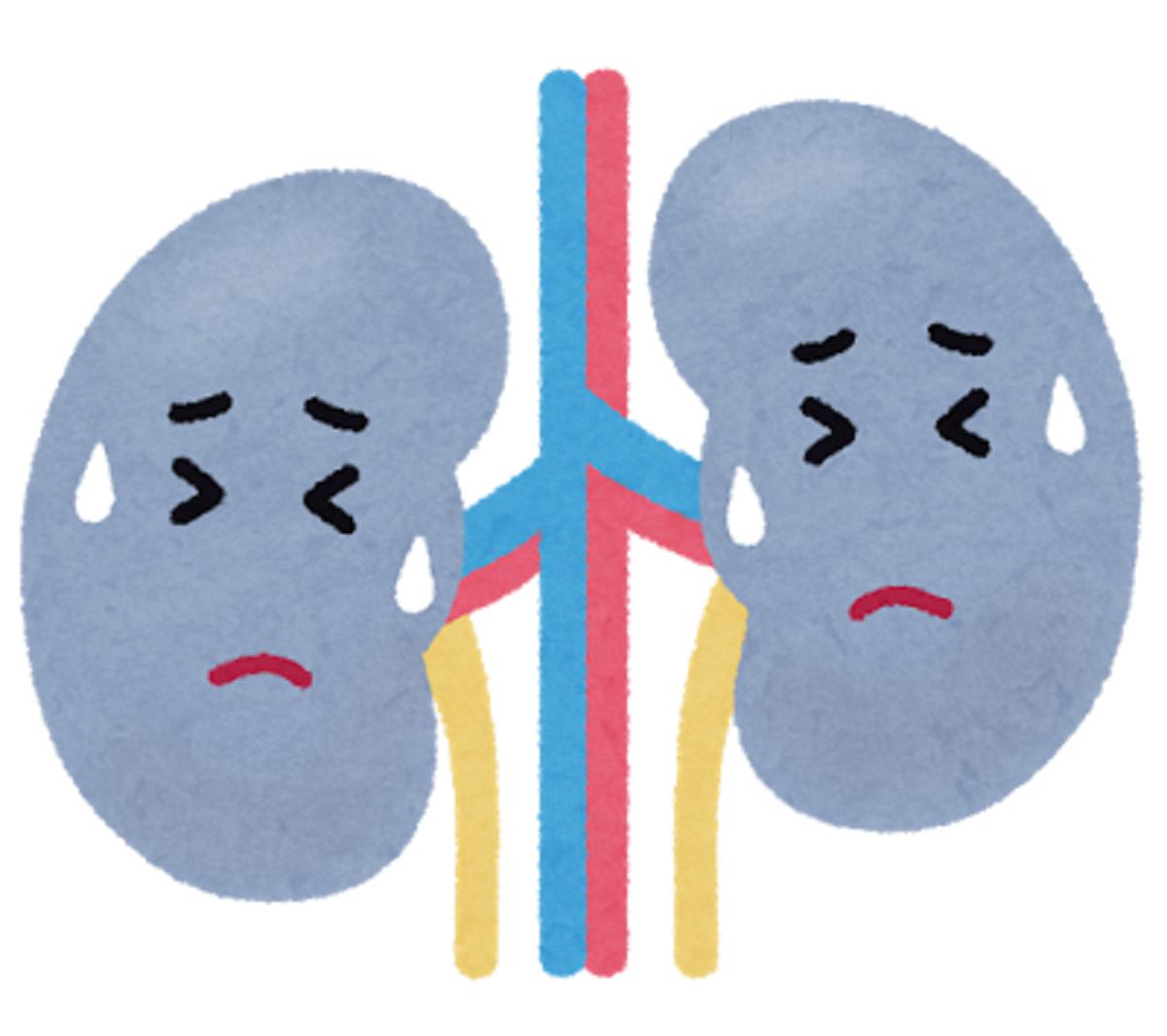 ベザフィブラート(ベザトール®)と腎機能について