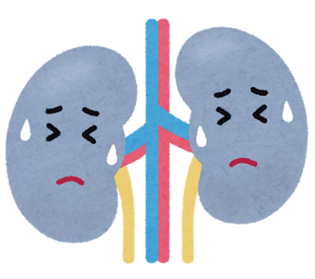 SGLT2阻害薬と腎機能~各薬剤の添付文書上の共通部分と違いについて~
